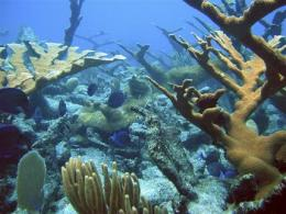 Death of coral reefs could devastate nations (AP)