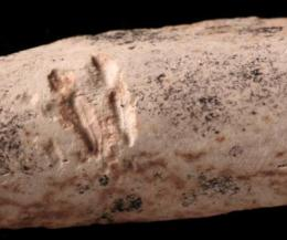 Dinosaur-chewing mammals leave behind oldest known tooth marks