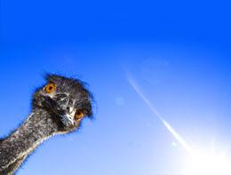 Dinosaur extinction grounded ancient birds