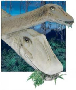 Dinosaur skull changed shape during growth