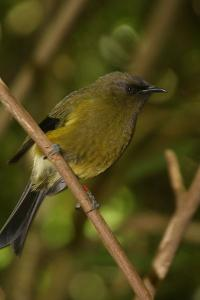 Disappearance of New Zealand birds 100 years ago makes life tough for plants: study