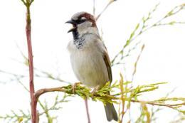 Do hormones dictate breeding success in birds?