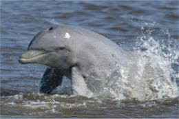 Dolphins' health shed light on human and ocean health