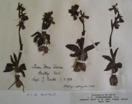 Ecologists find new clues on climate change in 150-year-old pressed plants