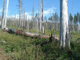 Effects of forest fire on carbon emissions, climate impacts often overestimated