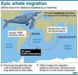 Epic whale migration