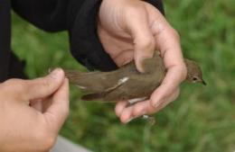 Even small patches of urban woods are valuable for migrating birds