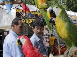 Expo shows illegal pet trade rampant in Indonesia (AP)