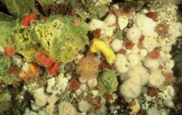 Faster water flow means greater diversity of invertebrate marine life