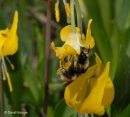 Fears of a decline in bee pollination confirmed