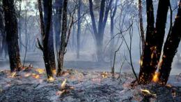Aspects of prescribed burning questioned by experts
