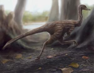 First-ever single-claw dinosaur fossil found in China