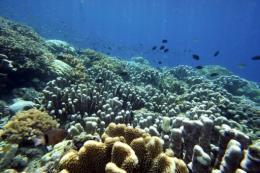 Fish swim in the coral reef of Bunaken Island national marine park