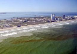 Forecast system to warn of toxic algal outbreaks along Texas' shoreline