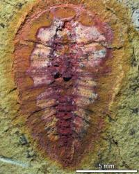 Fossil find fills in picture of ancient marine life