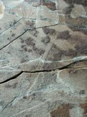 Fossils show earliest animal trails