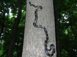 Fragmented forests result in more snakes, fewer birds