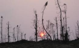 Frequent, severe fires turn Alaskan forests into a carbon production line