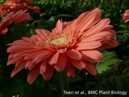 Genetics in bloom
