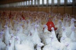 Germany detects illegal dioxin levels in poultry (AP)