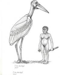 Giant stork once roamed Indonesian island (AP)
