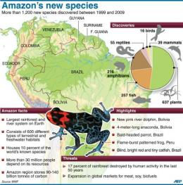 Graphic on a WWF study reporting the discovery of new species in the Amazon region over the past decade