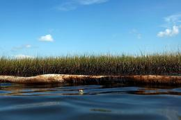 Grass and a boom soaked in oil from the BP Deepwater Horizon wellhead are seen in the wetlands in June