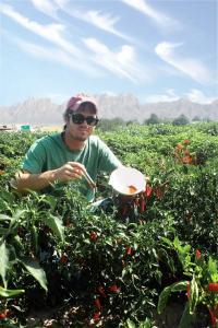 'Green' chemistry extraction method developed for hot capsicum fruit