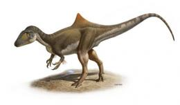 Handout photo released by Nature magazine shows the reconstitution of a new species of dinosaur