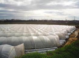 Heavy metals and pesticides threaten a Huelva wetland