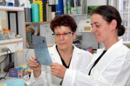 Hebrew University researchers discover expanded role for cancer-causing gene