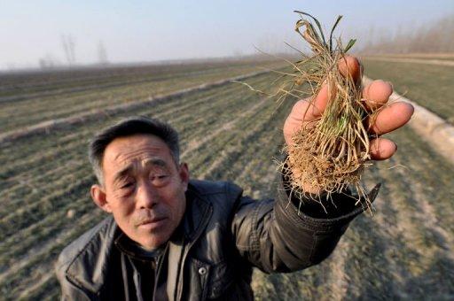 Из-за рекордной засухи некоторые провинции Китая могут потерять половину урожая