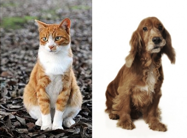 Pre Frontal Cortex Cats Dogs Humans