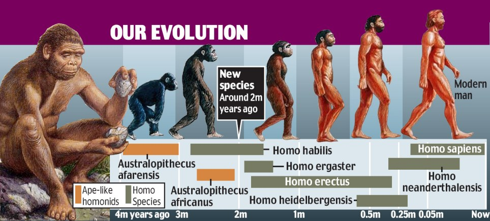 a history of the human evolution