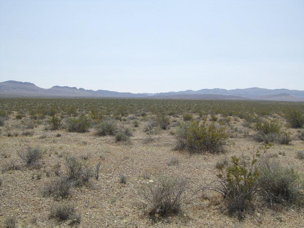 Climate Change, Nitrogen Loss Threaten Plant Life in Arid ...