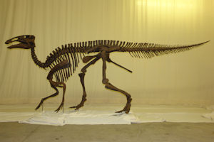 Dinosaurs were lighter than previously thought, new study shows