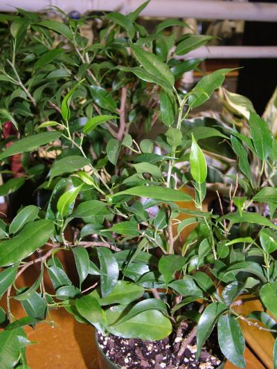 Indoor plants found to release volatile organic compounds - Most popular house plants ...
