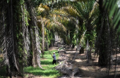 buying sustainable palm oil Therefore, the best solution is to ensure you buy products that contain sustainable palm oil there is a misconception that these concerns can be addressed when companies simply stop using palm oil in their products.