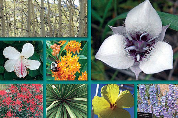 Plant species?