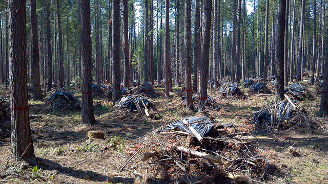 global warming and forests A new study suggests hotter climates resulting from global warming may prevent  forests from regenerating after wildfires.
