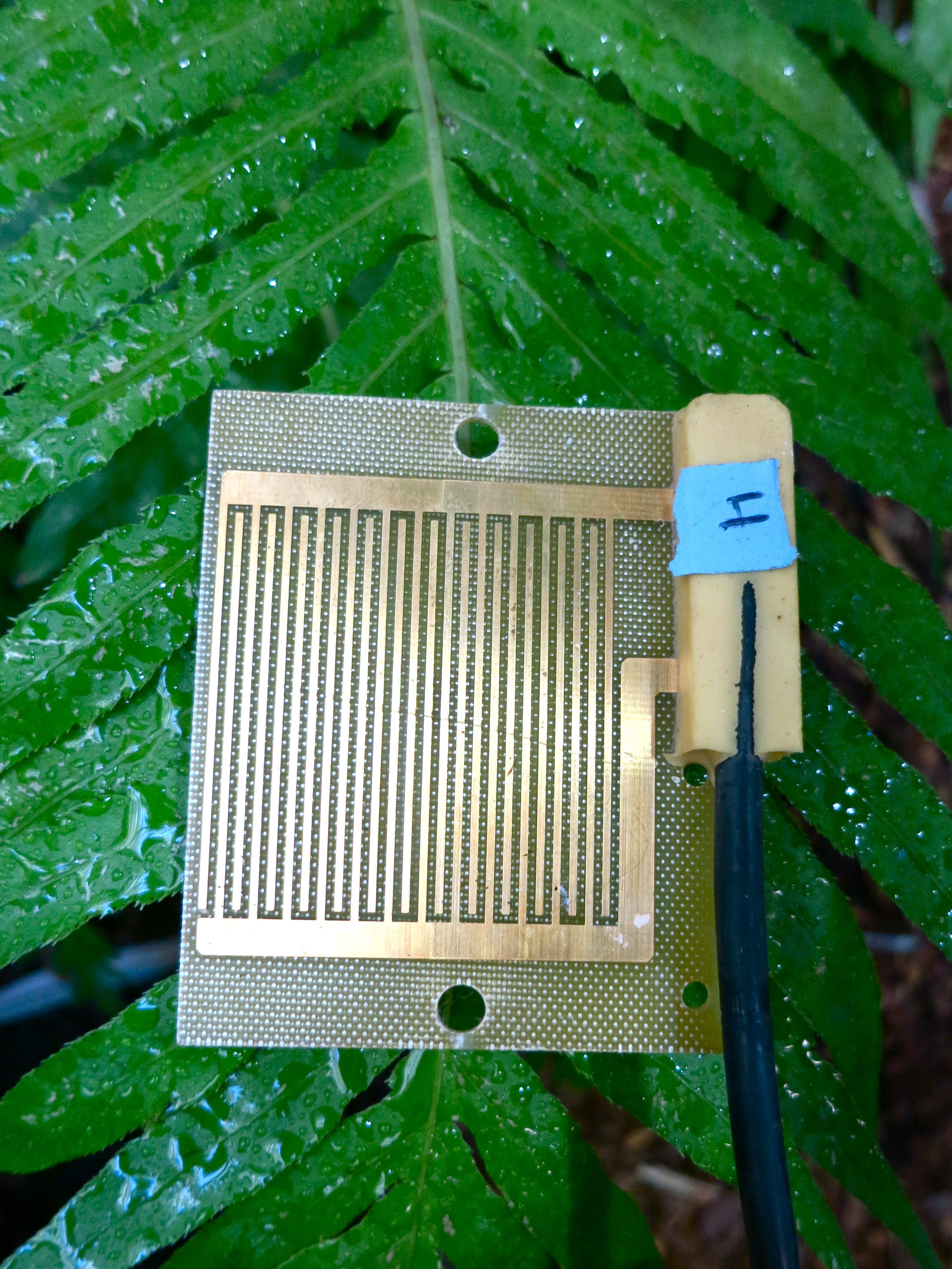 An electronic 'leaf' the researchers used to detect when clouds ...
