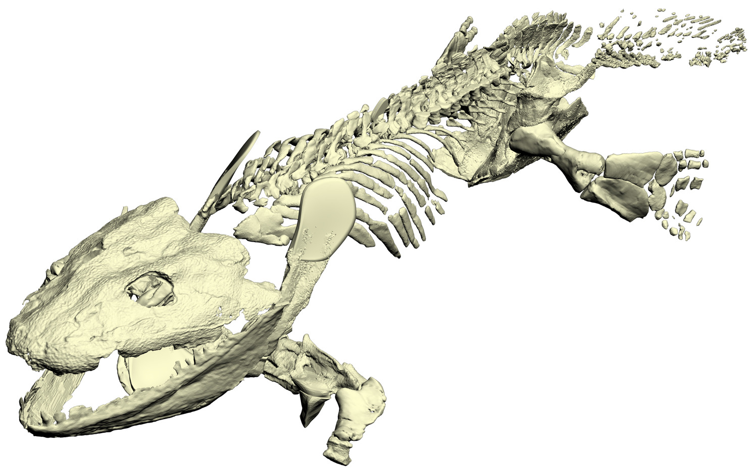 Shift to shore new model shows extinct tetrapod for Fish that walk on land