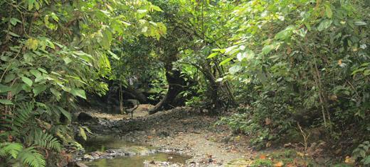 biodiversity rainforest - photo #39