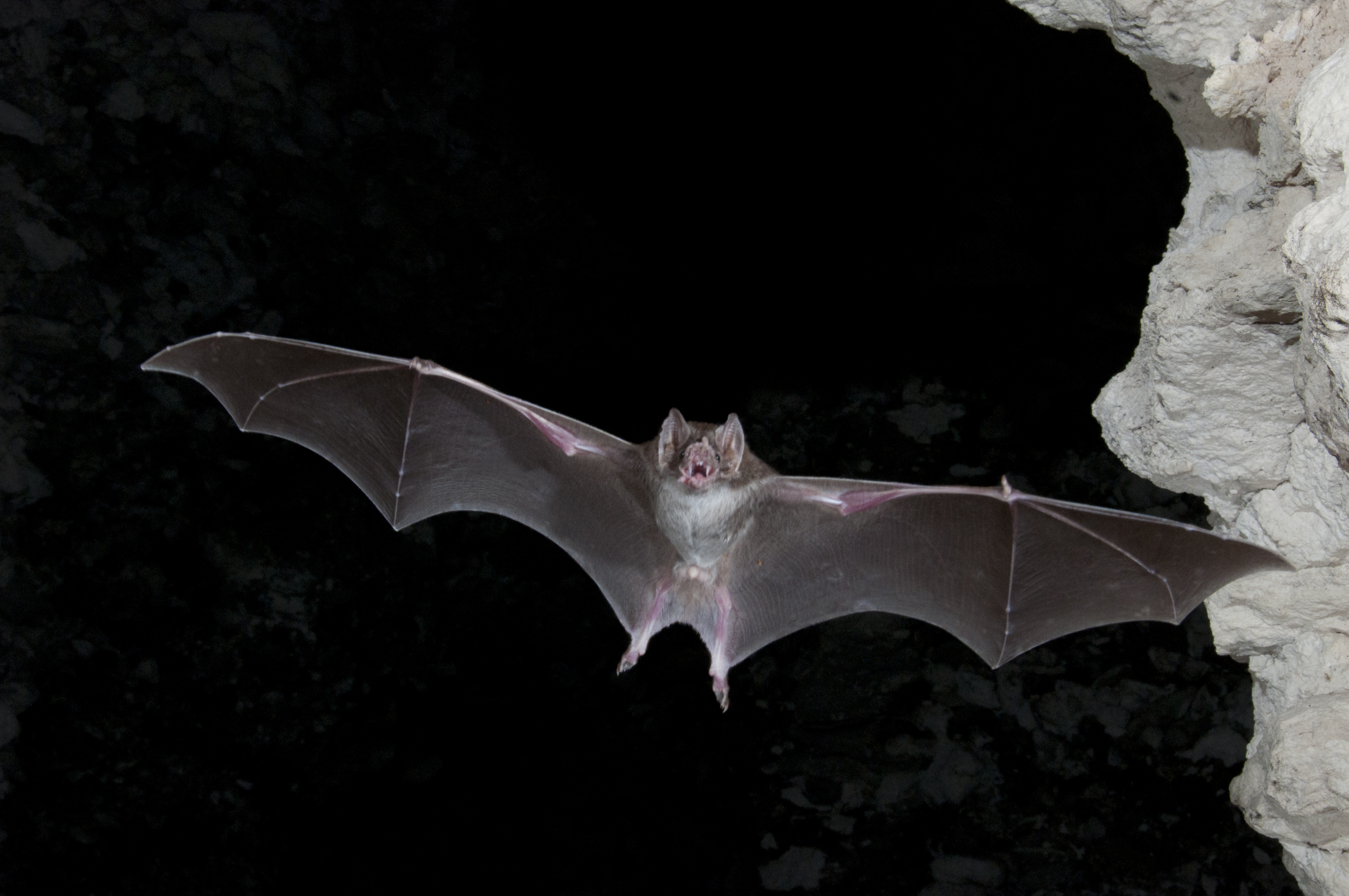 The night life: Why we need bats all the time