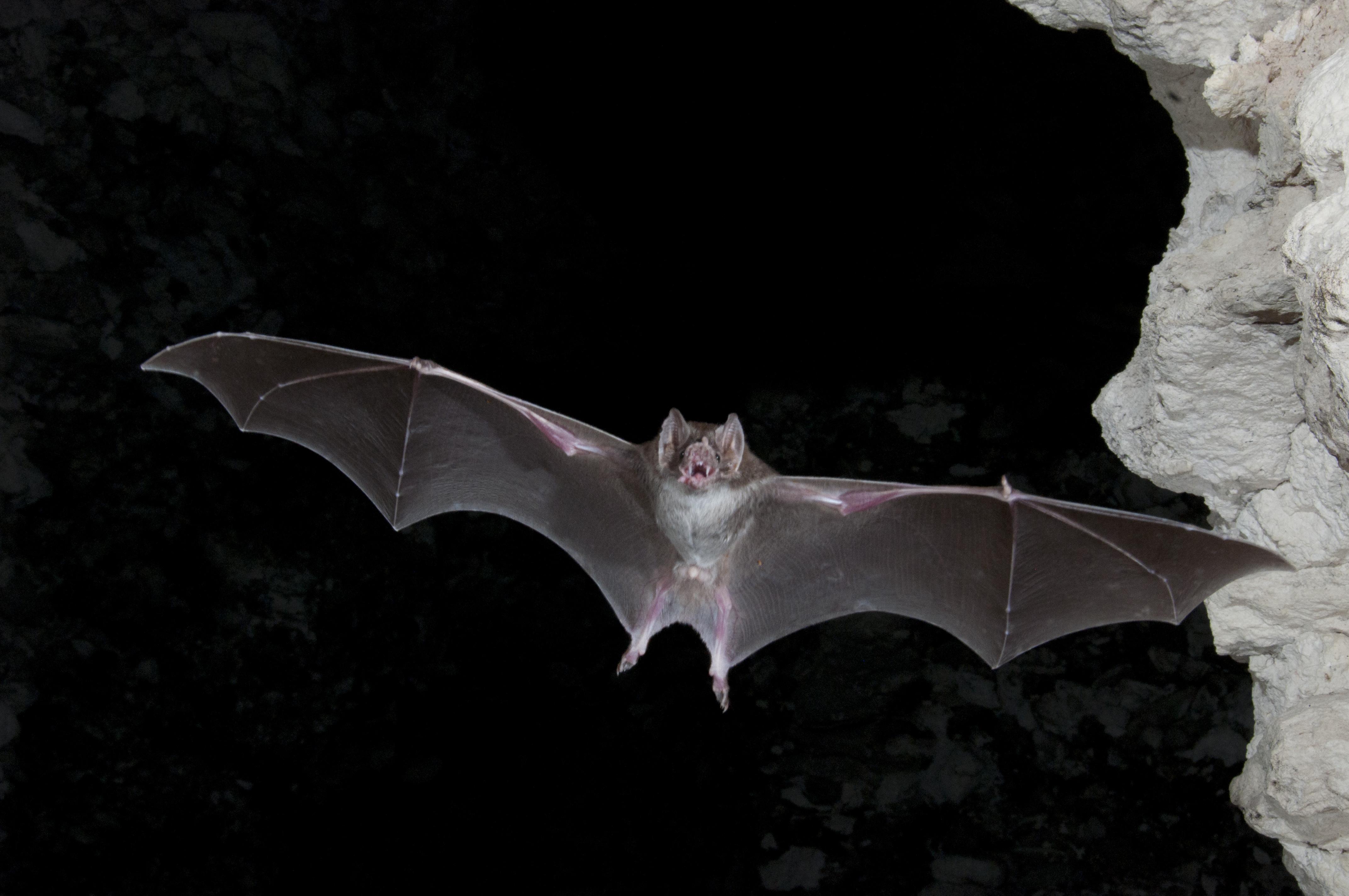 bat at