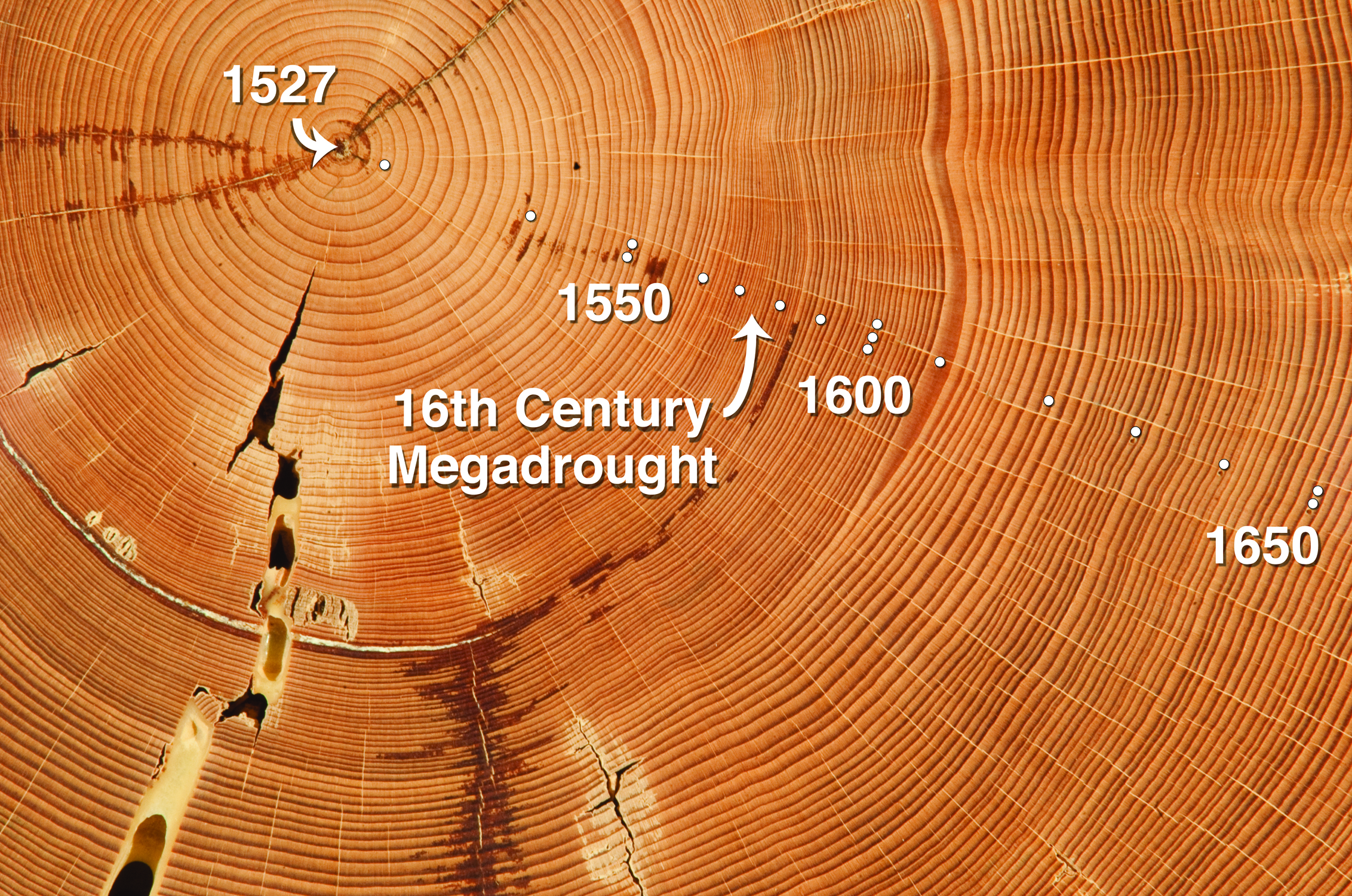 tree ring dating is possible because Dating possible the trial and error in the atmosphere at a certain time is tree ring cellulose because typical dating method of annual tree ring dating a.