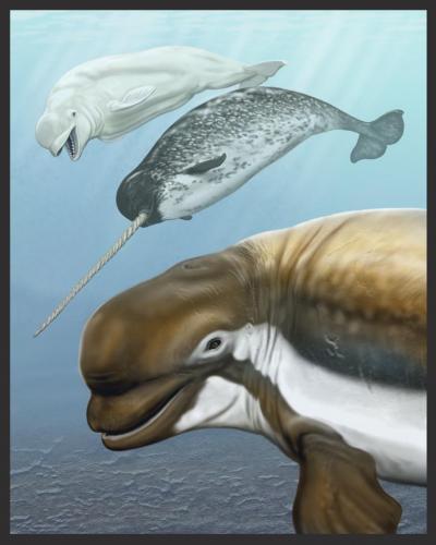 ancientwhale.jpg