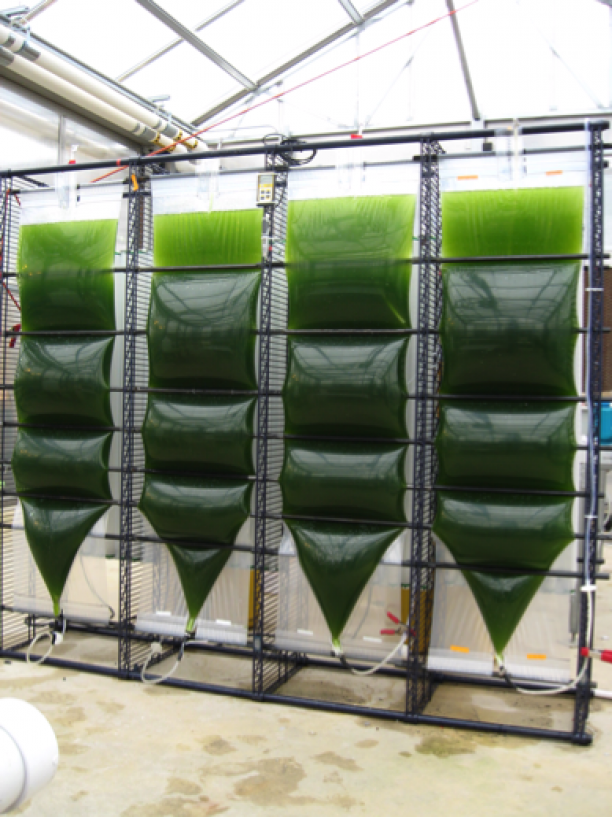algae should not be the future biofuel Micro-algae cultivation for biofuels: cost, energy balance, environmental impacts that algae biofuel systems are able to clearly of micro-algal biofuel production share a common aspiration to identify production bottlenecks and help steer the future development of algae biofuel.