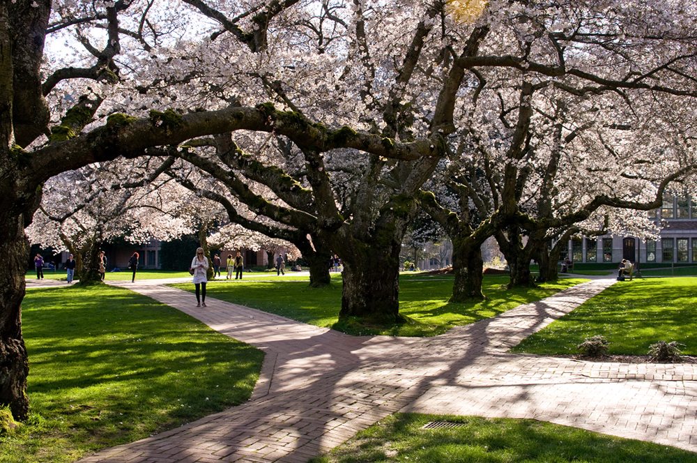 D C Cherry Trees Blooms Won 39 T Wait In Warming World