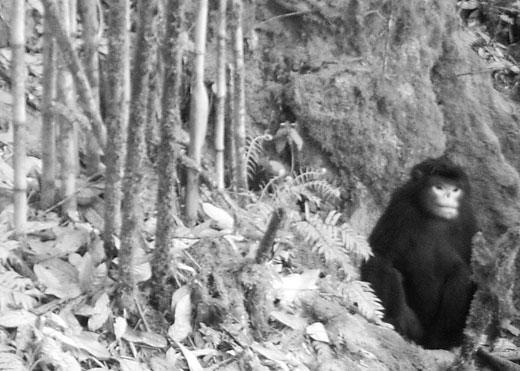 Nuevos animales descubiertos en 2012 Firstimageso